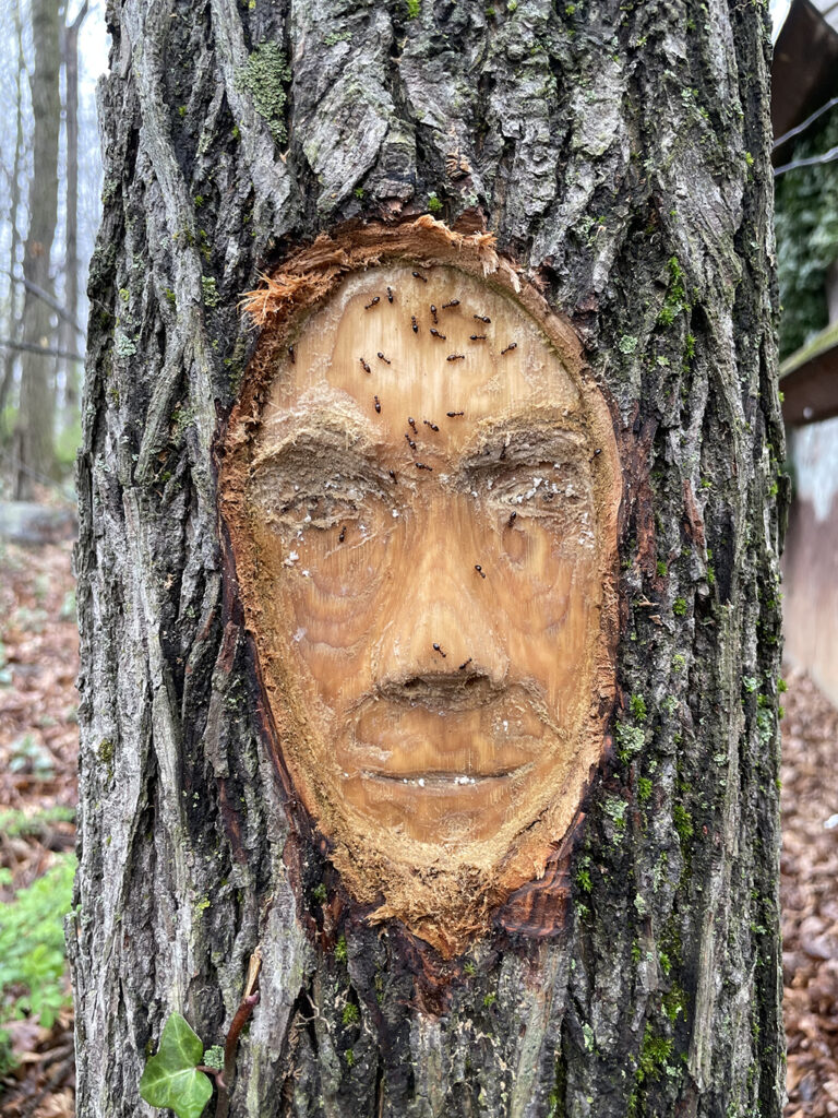 """""""Me in a Tree"""" carved portait in a tree trunk"""